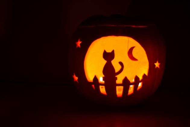 Cat  Pumpkin Carving Template  Caterpillar